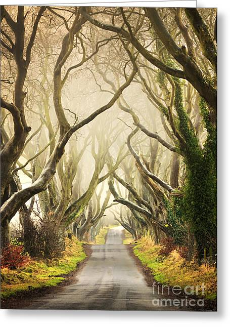 Tress Greeting Cards - The Dark Hedges Greeting Card by Pawel Klarecki
