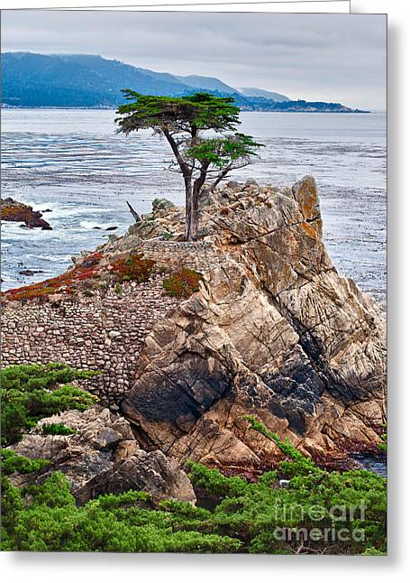 Foggy Ocean Greeting Cards - The famous Lone Cypress tree at Pebble Beach in Monterey California Greeting Card by Jamie Pham