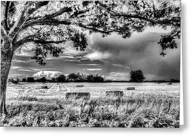 Farmers Field Greeting Cards - The Field Beyond The Tree Greeting Card by David Pyatt