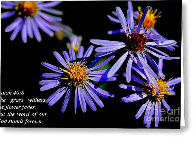 Aster Greeting Cards - The Flower Fades Greeting Card by Thomas R Fletcher