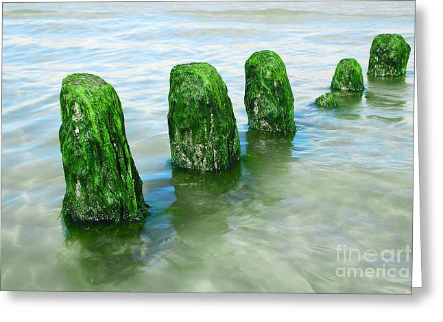 Alga Greeting Cards - The Green Jetty Greeting Card by Hannes Cmarits