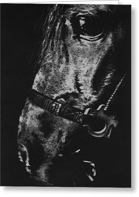Custom Horse Portrait Greeting Cards - The Horse Greeting Card by Natasha Denger