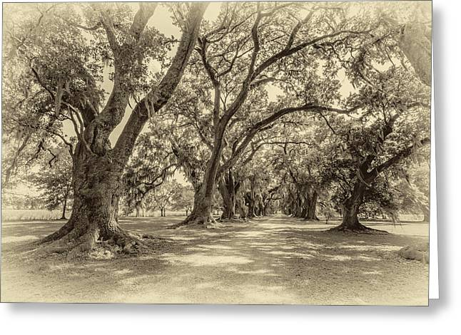 Slaves Photographs Greeting Cards - The Lane sepia Greeting Card by Steve Harrington