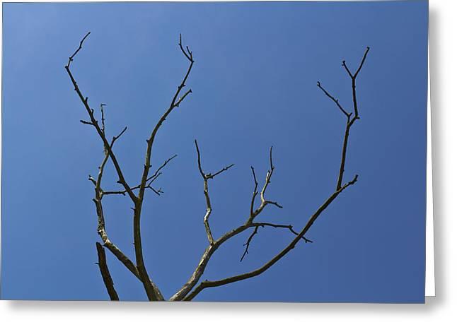 The Lightning Tree Greeting Card by David Pyatt