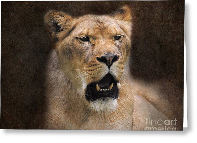 Lioness Greeting Cards - The Lioness Greeting Card by Jai Johnson