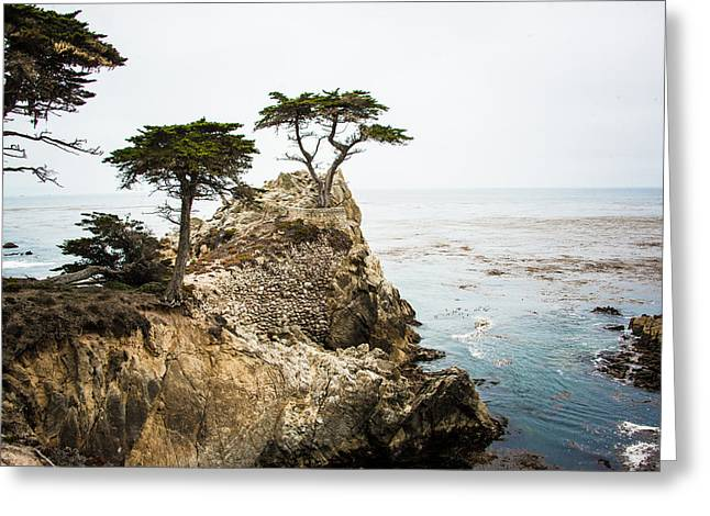 The Lone Cypress Greeting Cards - The Lone Cypress Greeting Card by Kara Proehl