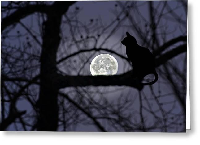 The Moon Watcher Greeting Card by Susan Leggett