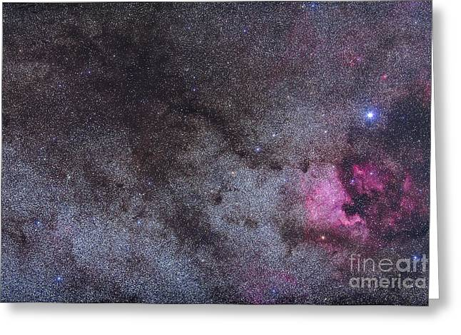Deneb Greeting Cards - The North America Nebula And Dark Greeting Card by Alan Dyer