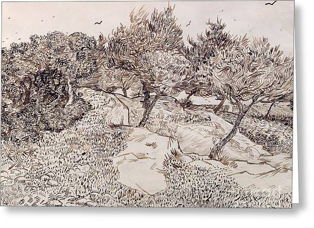 Crow Greeting Cards - The Olive Trees Greeting Card by Vincent Van Gogh