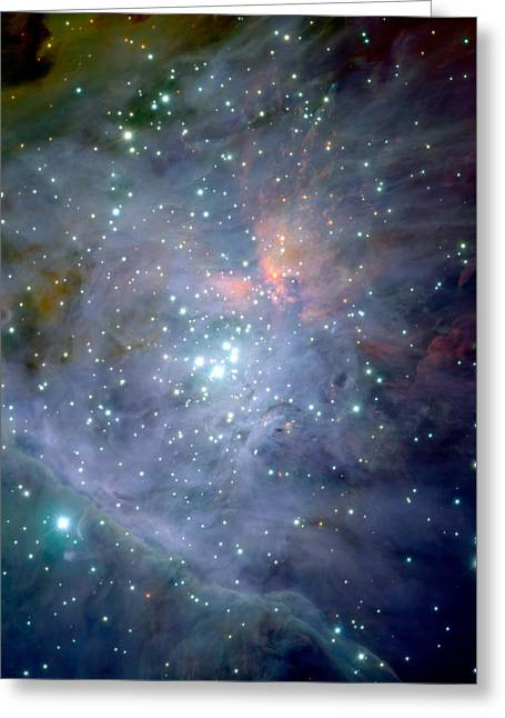 Science Greeting Cards - The Orion Nebula Greeting Card by Celestial Images