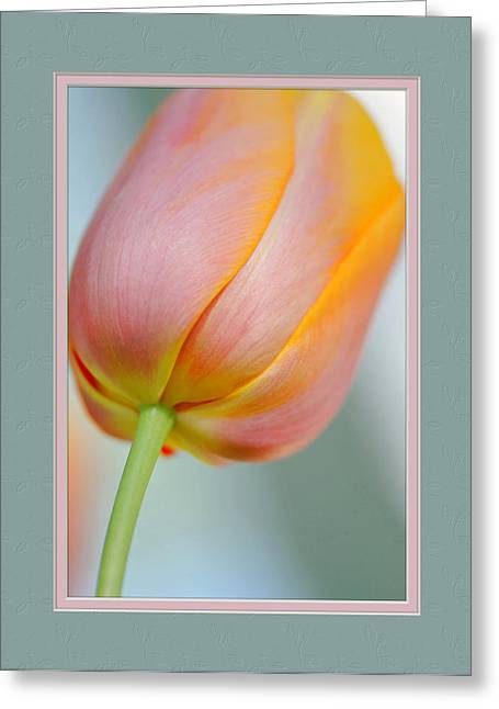 Matting Greeting Cards - The Perfection Of A Tulip Greeting Card by Charles Feagans
