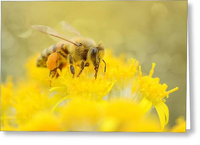 The Pollinator Greeting Card by Fraida Gutovich