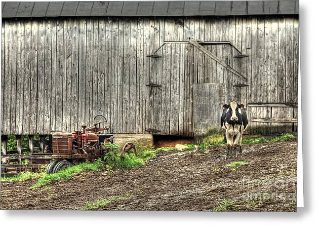 Dairy Barn Greeting Cards - The Poser Greeting Card by Benanne Stiens