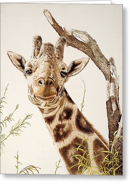 Reserve Drawings Greeting Cards - The Quirky Giraffe Greeting Card by Sherri Vanschaick