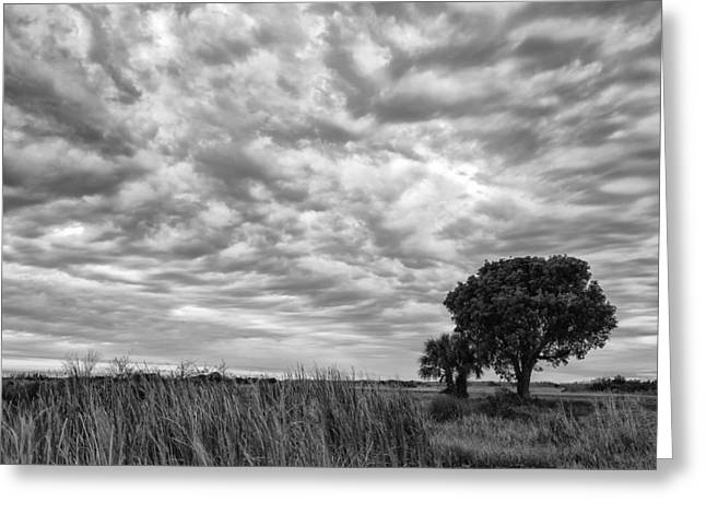 The Right Tree Greeting Card by Jon Glaser