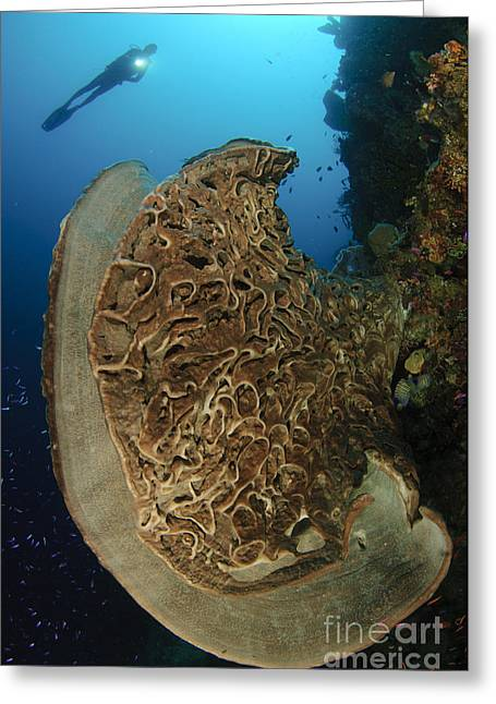 Siliceous Greeting Cards - The Salvador Dali Sponge With Intricate Greeting Card by Steve Jones