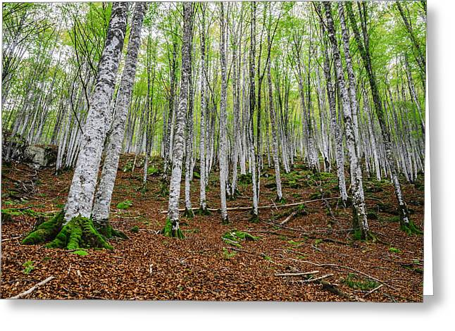 Green Day Greeting Cards - The white trees Greeting Card by Tilyo Rusev