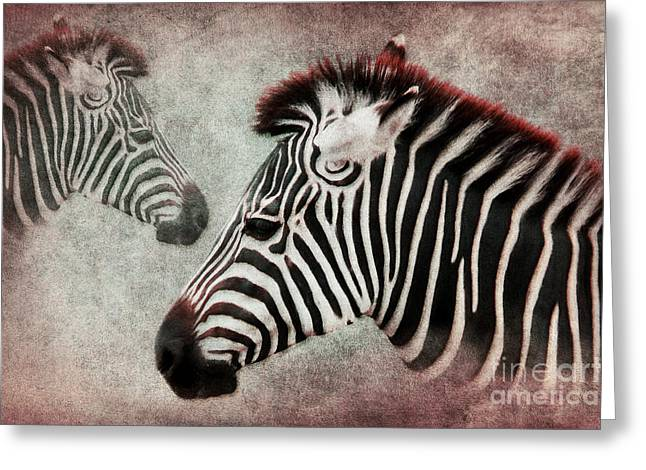 Zebra Pictures Greeting Cards - The Zebra Greeting Card by Angela Doelling AD DESIGN Photo and PhotoArt