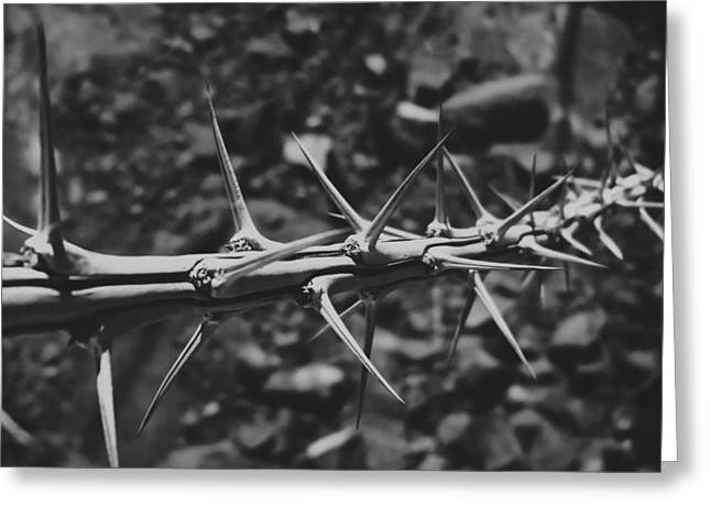 Harmful Greeting Cards - Thorns of the Arizona Desert Greeting Card by Mountain Dreams