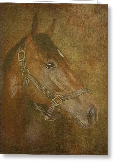 Race Horse Greeting Cards - Thoroughbred Greeting Card by Angie Vogel