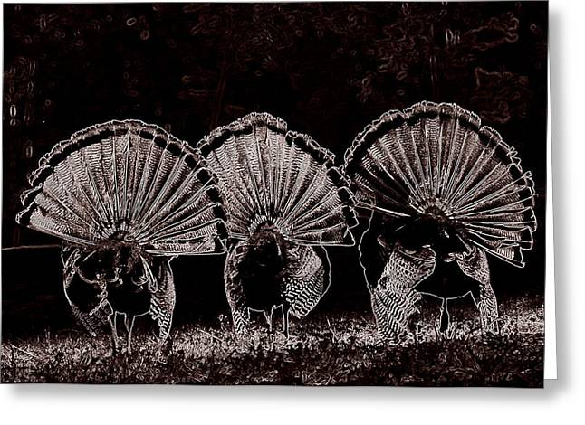 Hunting Bird Jewelry Greeting Cards - Three Fans Greeting Card by Todd Hostetter
