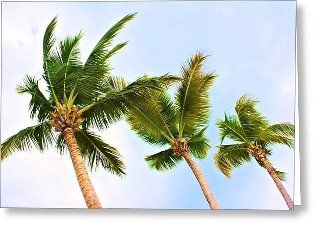 Rincon Beach Greeting Cards - Three Palms Greeting Card by Loretta Cassiano