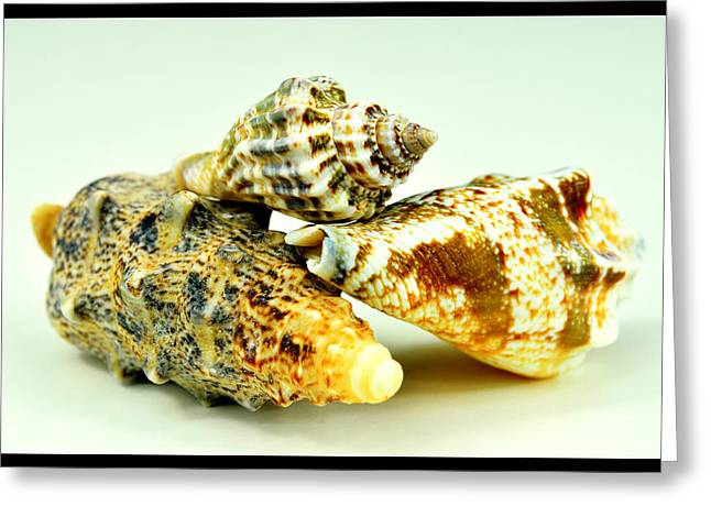 Three Seashells  Greeting Card by Toppart Sweden