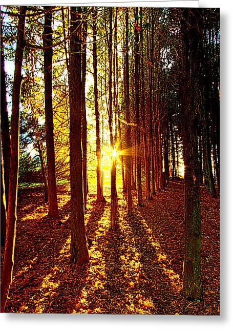 Path Greeting Cards - Through the Pines Greeting Card by Phil Koch
