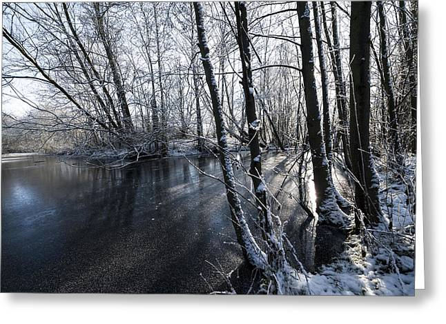 Snowy Stream Greeting Cards - Through the Trees Greeting Card by Svetlana Sewell