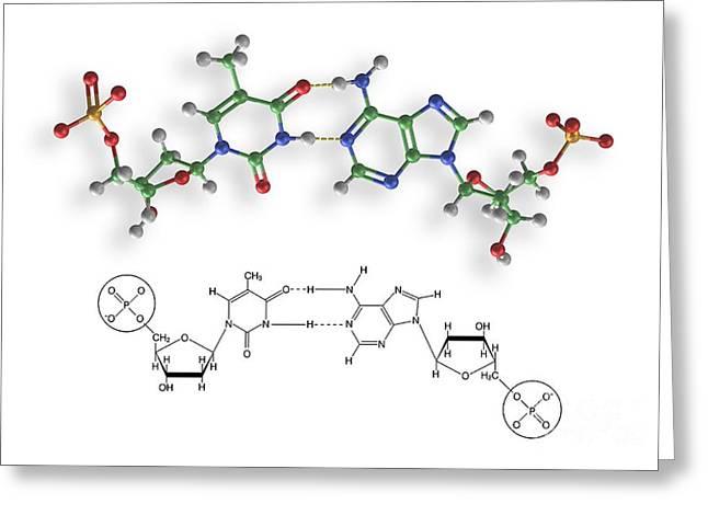 Nucleic Acid Greeting Cards - Thymine-adenine Interaction, Artwork Greeting Card by Carlos Clarivan