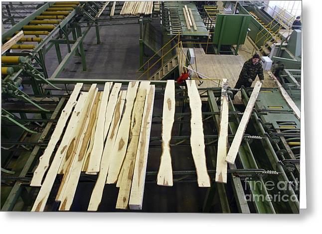 Saw Greeting Cards - Timber Coming From A Saw Line At Sawmill Greeting Card by RIA Novosti