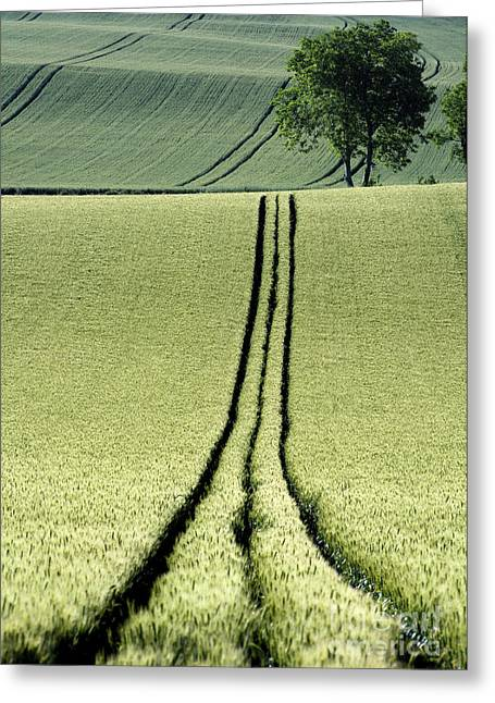 Cropland Greeting Cards - Tire tracks in a wheat field. Auvergne. France. Greeting Card by Bernard Jaubert