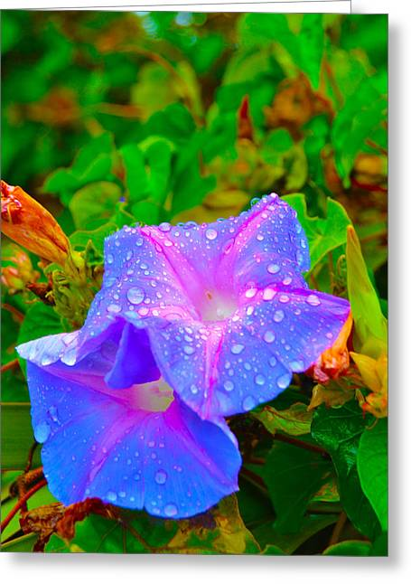Florida Flowers Mixed Media Greeting Cards - Togetherness Greeting Card by Gustave Kurz