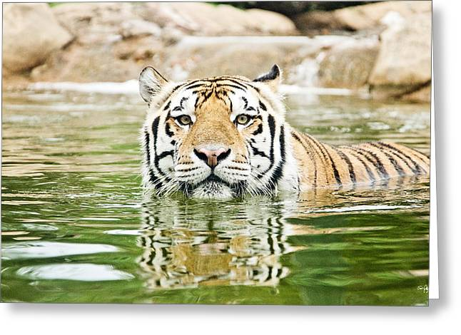 Mike The Tiger Greeting Cards - Top Cat Greeting Card by Scott Pellegrin