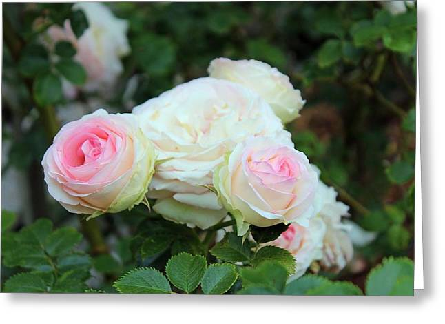Layers Greeting Cards - Touch Of Pink Greeting Card by Cynthia Guinn