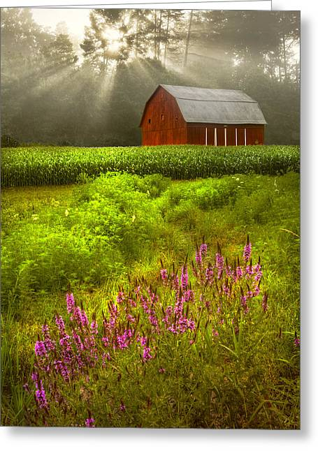 Touched By The Sun Greeting Card by Debra and Dave Vanderlaan