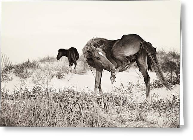 Shadow Horse Studios Greeting Cards - Tough Spot to Reach Greeting Card by Lyndsey Warren