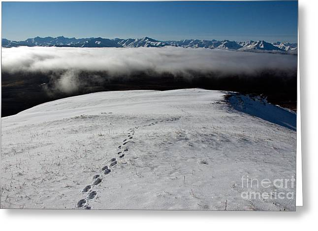 Animal Tracks Greeting Cards - Tracks In Snow Greeting Card by Mark Newman