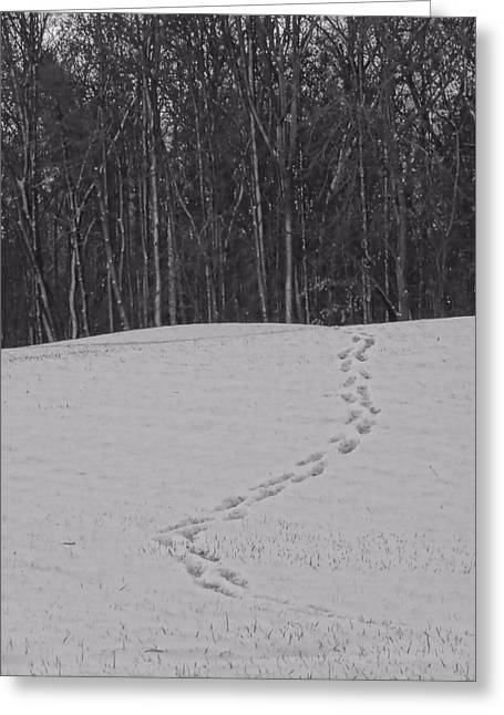 Path In Life Greeting Cards - Tracks In The Snow Greeting Card by Dan Sproul