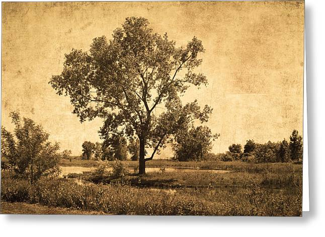 Graceful Tree Greeting Cards - Tranquility Greeting Card by Kim Hojnacki