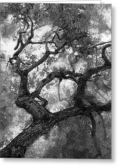 Tree At Berkeley Greeting Card by Ron Regalado