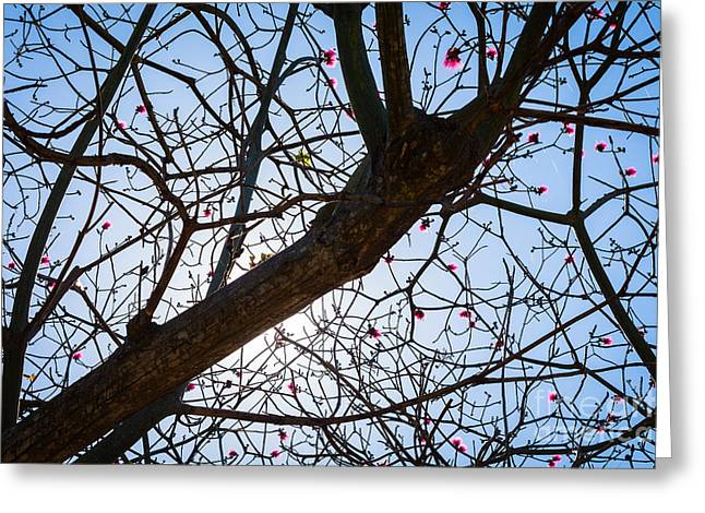 Florida Flowers Greeting Cards - Tree branches  Greeting Card by Juan  Silva