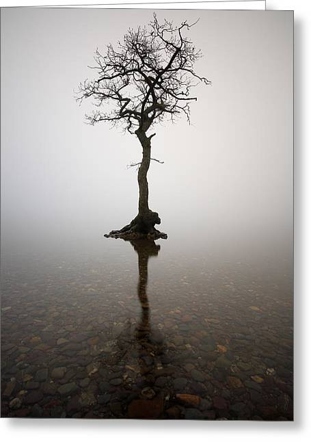 Reflection In Water Greeting Cards - Tree Greeting Card by Grant Glendinning