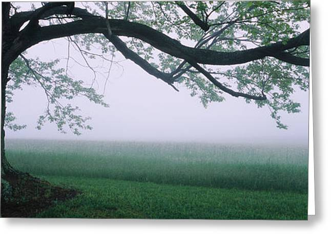Park Scene Greeting Cards - Tree In A Farm, Knox Farm State Park Greeting Card by Panoramic Images