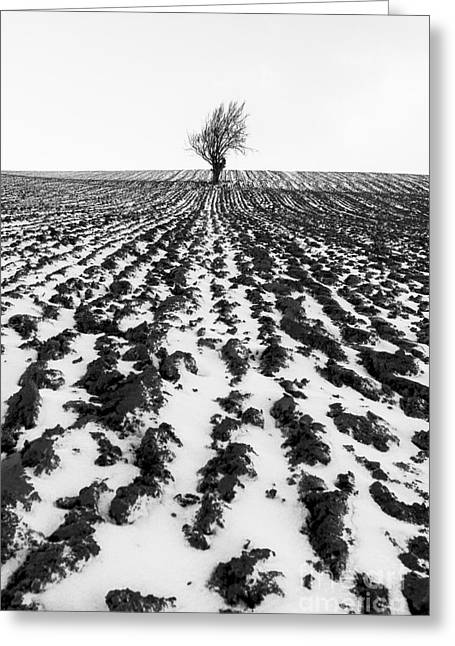 Fresh Snow Greeting Cards - Tree in snow Greeting Card by John Farnan