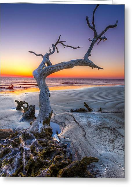 Atlantic Beaches Greeting Cards - Tree of Enchantment Greeting Card by Debra and Dave Vanderlaan