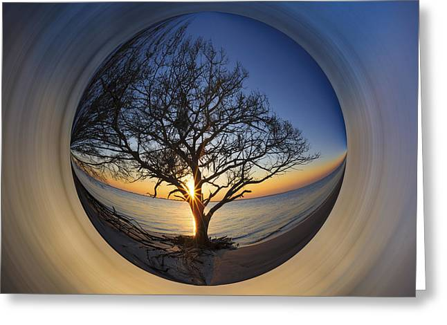 Porthole Greeting Cards - Tree of Life Greeting Card by Debra and Dave Vanderlaan