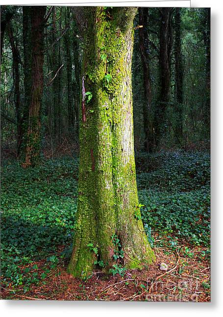 Open Land Greeting Cards - Tree Trunk Greeting Card by Carlos Caetano