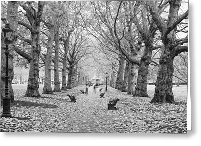 Leaf Change Greeting Cards - Trees Along A Footpath In A Park, Green Greeting Card by Panoramic Images
