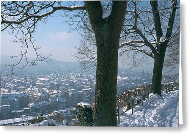 Bare Trees Greeting Cards - Trees Along A Snow Covered Road Greeting Card by Panoramic Images